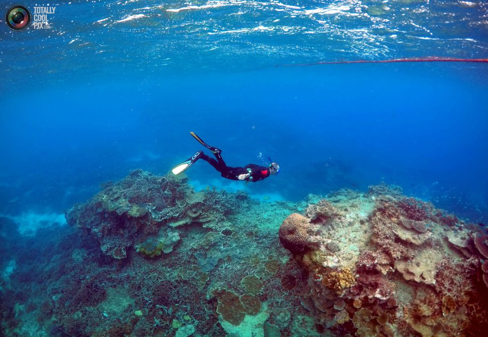 Питер Гаш осматривает состояние рифов.