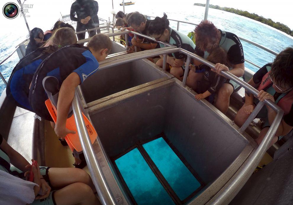 """Туристы смотрят через стекло на дне лодки, как плывет Питер, над местностью которую называют """"коралловыми садами"""", расположенная на острове Леди-Эллиот, к северо-востоку от города Бандаберг в штате Квинсленд, Австралия."""