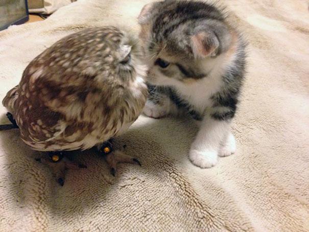 Котенок и совенок стали лучшими друзьями