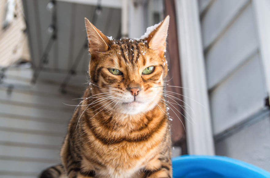 удовольствием какие чувства есть у кошки одной