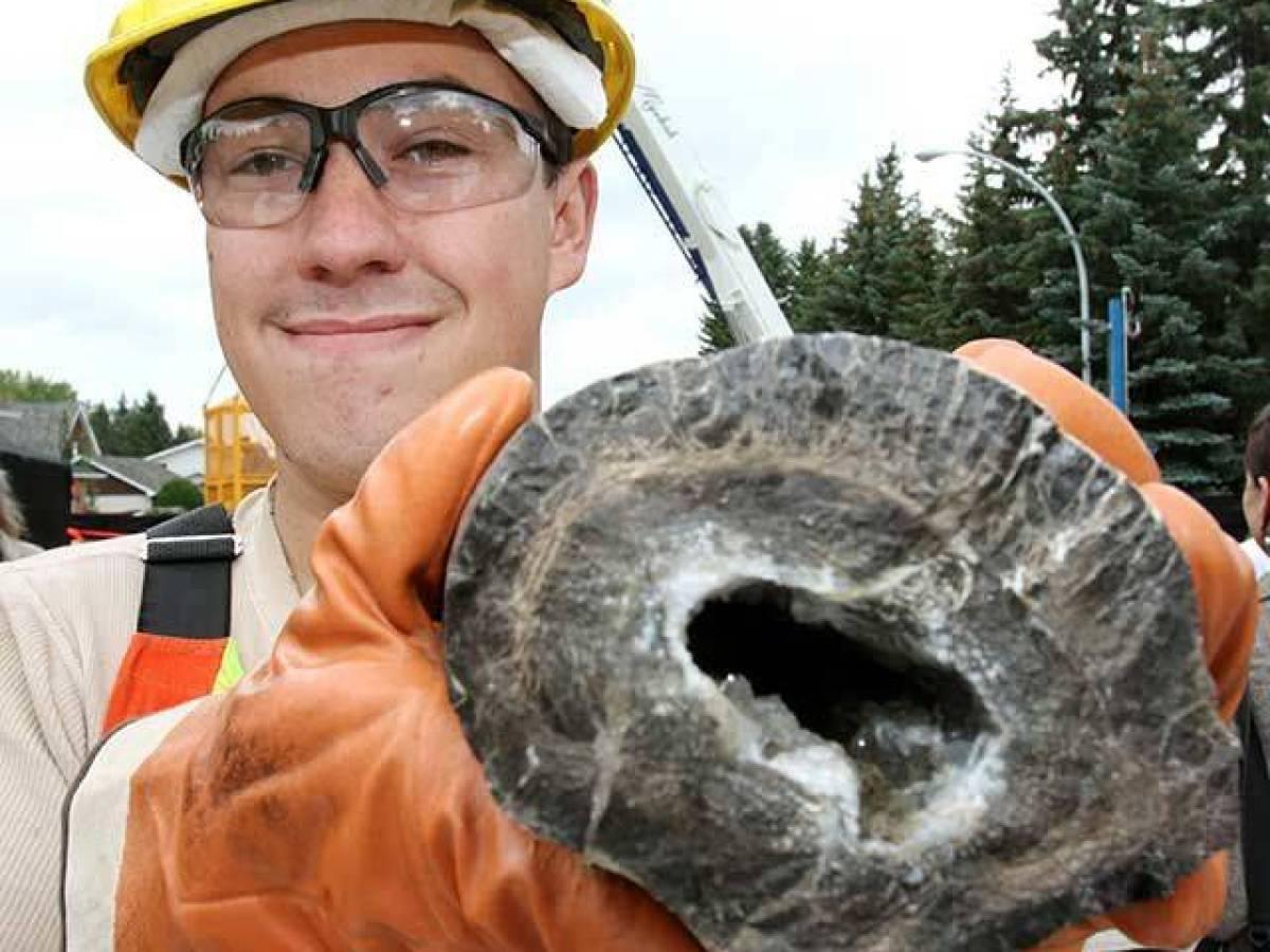 Ископаемое Динозавра