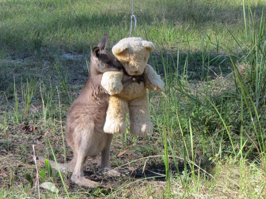 baby_kangaroo_teddy_1
