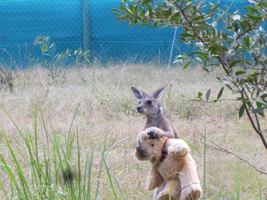 baby_kangaroo_teddy_2