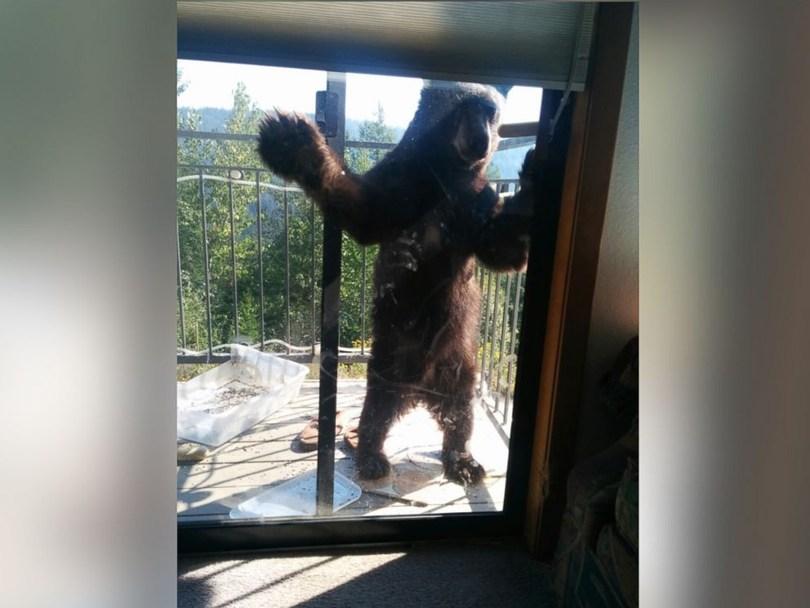 black_bear_4