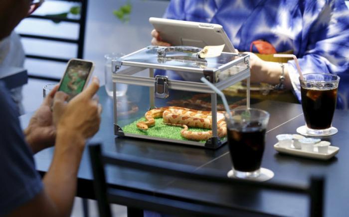 В Японии открылось кафе со змеями