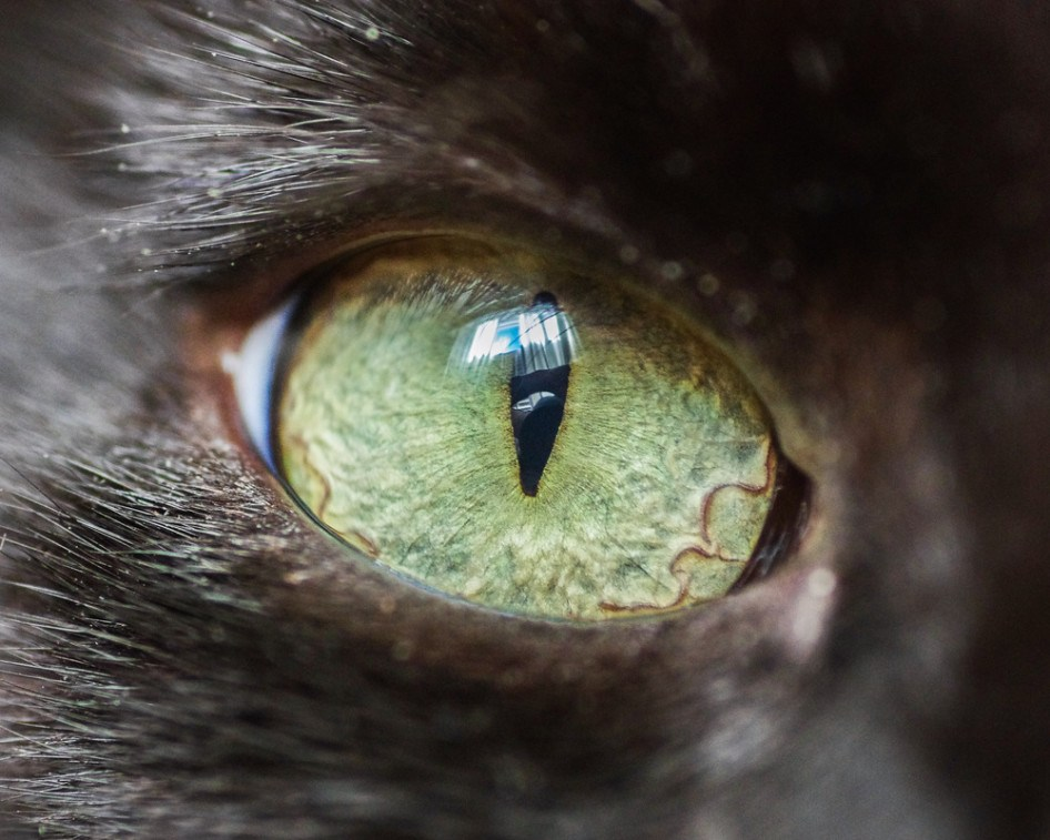 macro_cat_1