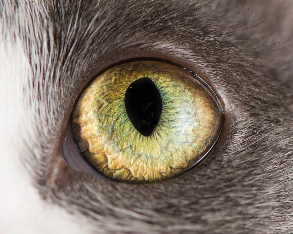 macro_cat_11