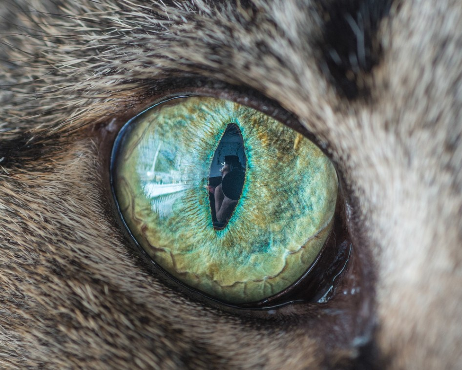 macro_cat_2