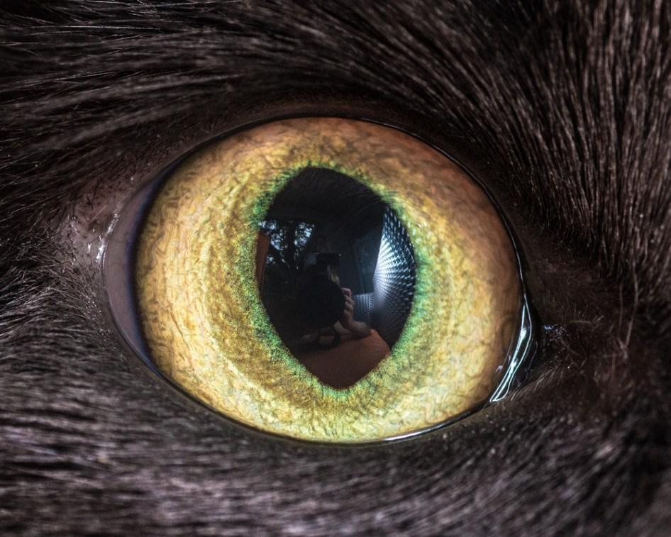 macro_cat_4