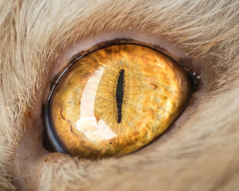 macro_cat_5