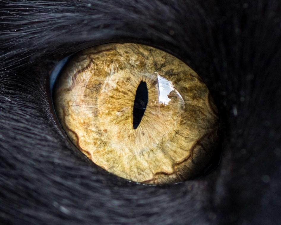 macro_cat_6