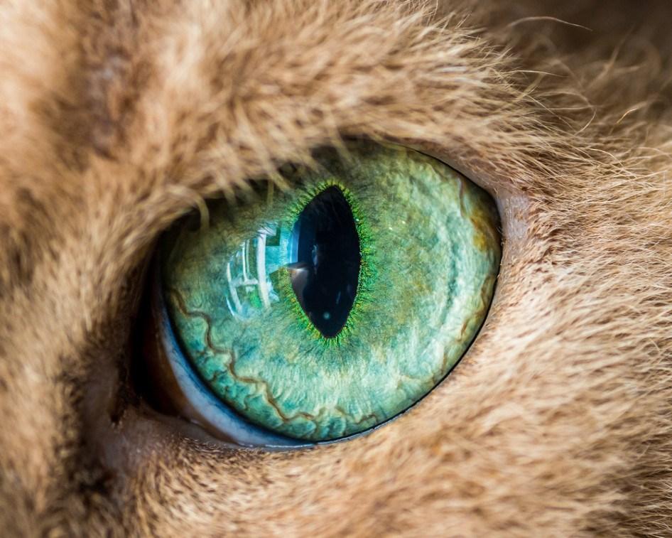 macro_cat_8
