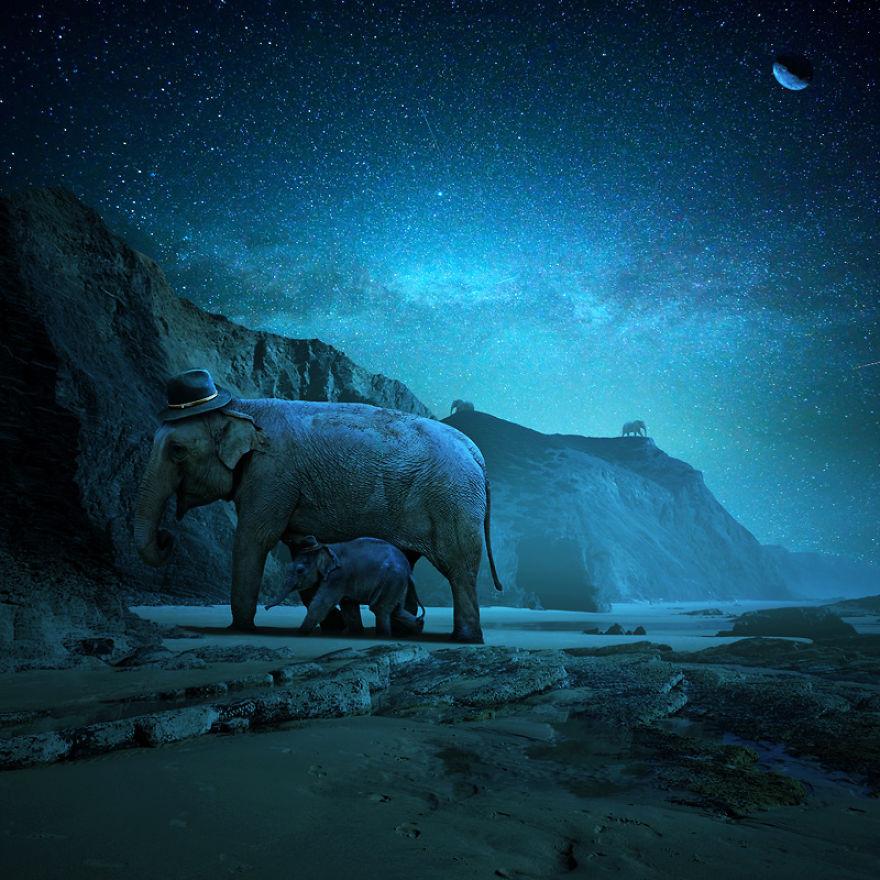 Слоны ночью