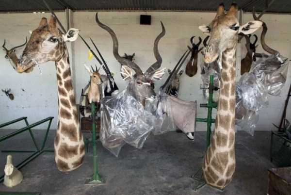taxidermy_namibia_10