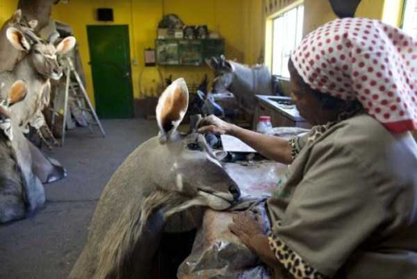 taxidermy_namibia_14