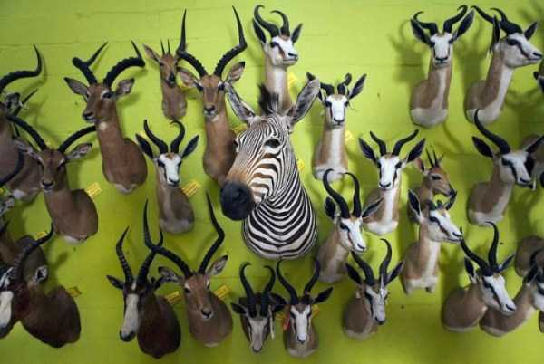 taxidermy_namibia_17
