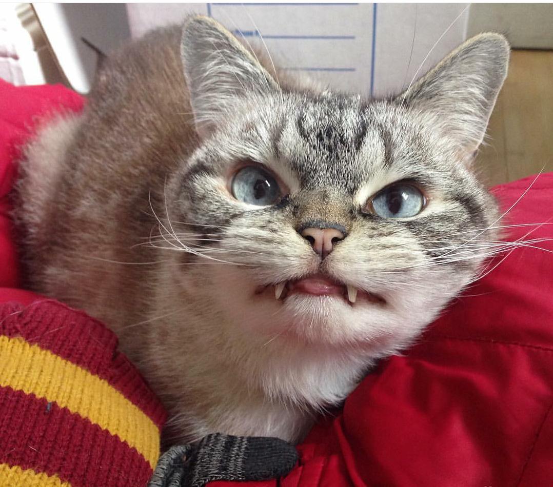 vampire_cat_1