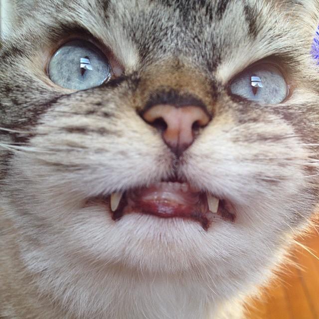 vampire_cat_10