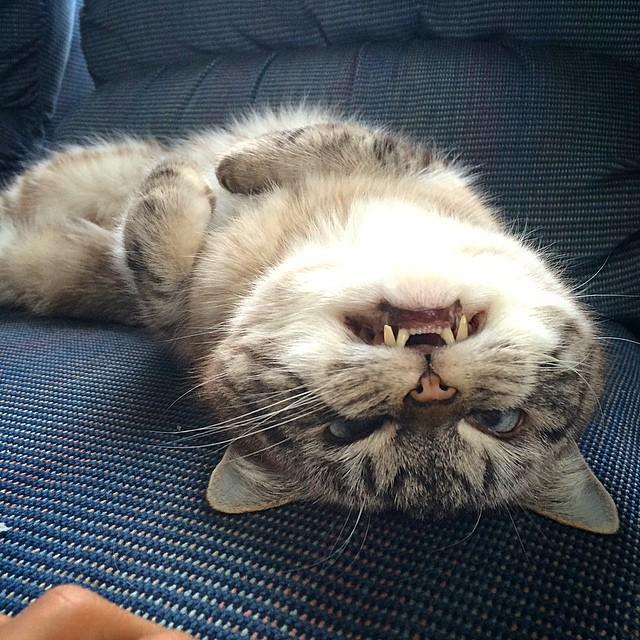 vampire_cat_7
