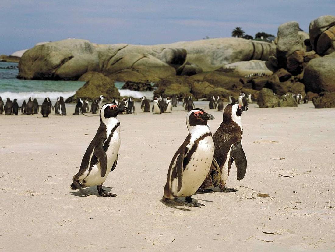 Пляж Боулдерс-Бич - Кейптаун, Южная Африка