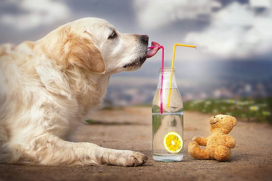 retriever_dog_20