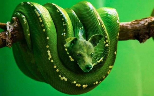 animal_hybrids _4