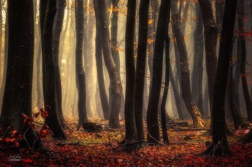 Осенний эмбиент изнутри