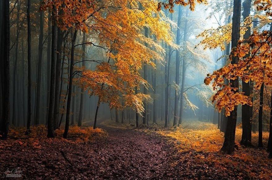 Скрытый под листьями