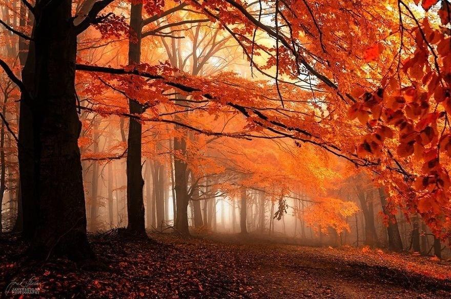 Картинки по запросу Осеннем царство