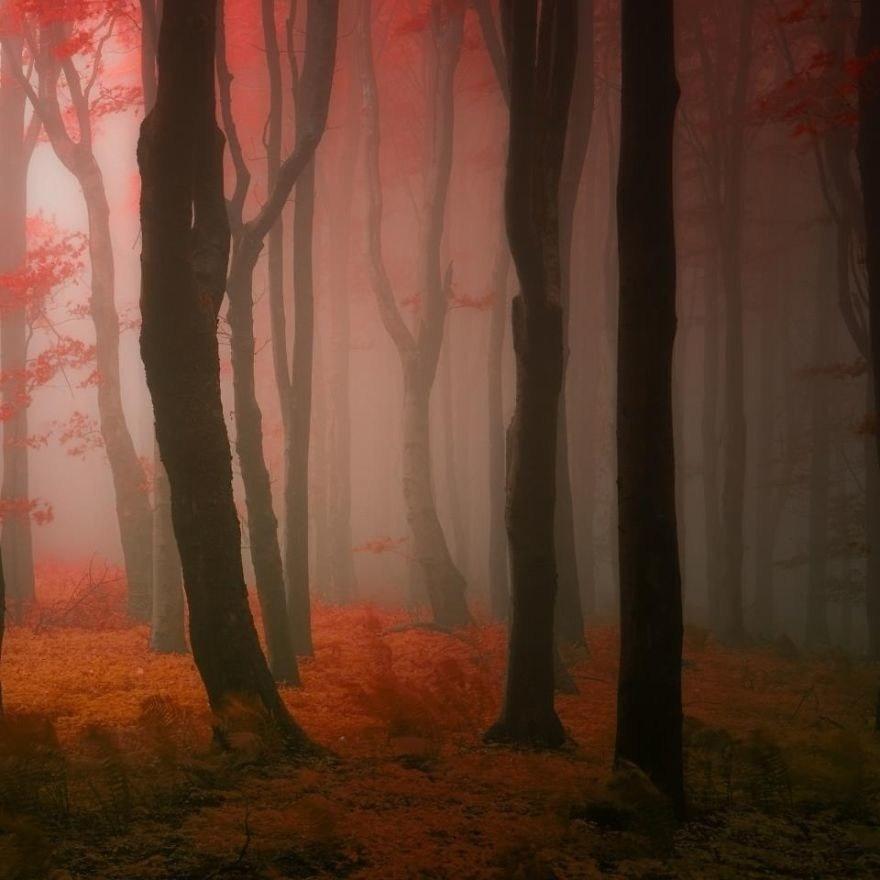 Туман в рыжий лес