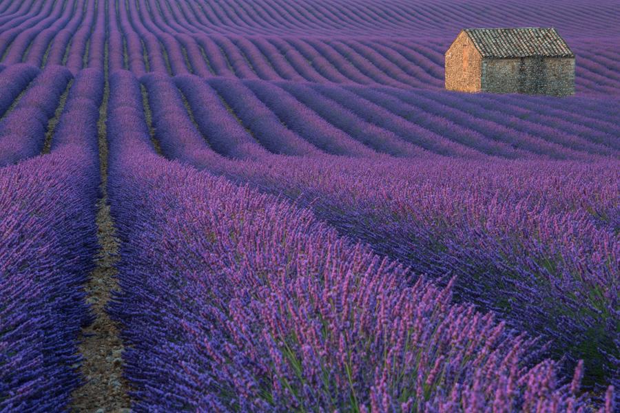 Я нашел этот великолепные поля в первое же утро в Валенсоле, Франция. Проснулся в 4:00, чтобы подыскать хорошее место для съемки, через 30 минут езды я увидел эти красивейшие поля. Это было то что нужно для меня. Я был там, я был единственным и никогда не видел фотографий этого места раньше.