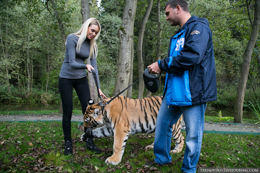 tiger_WORLD_18