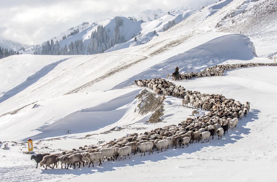 Казахские пастухи водят своих овец и коз по заснеженным полям в долине Guozigou, Синьцзян-Уйгурский автономный район, Китай, 21 ноября 2015 года