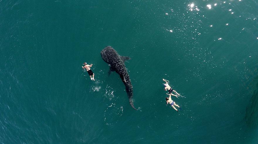 Китовая Акула и Туристы