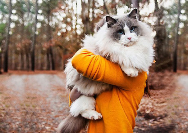 fluffy_cat_11
