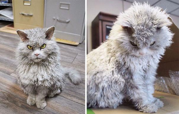 fluffy_cat_16