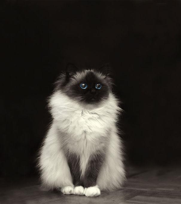 fluffy_cat_2
