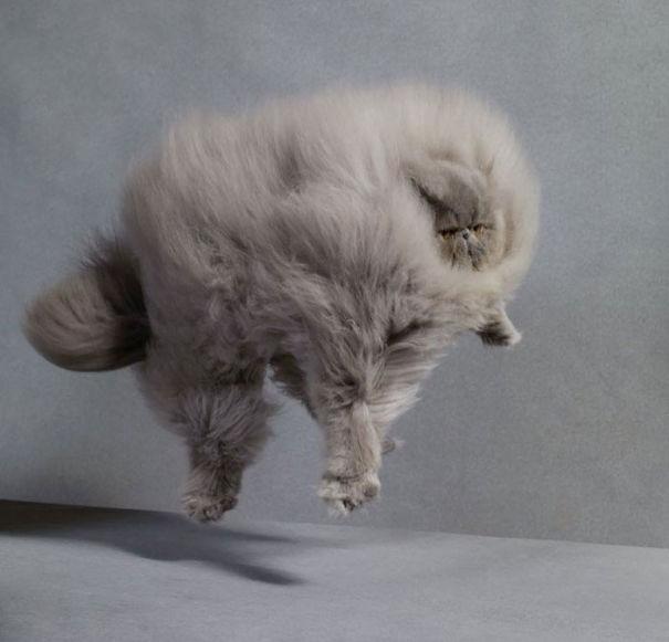 fluffy_cat_3