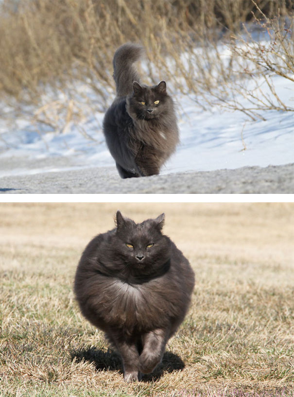 fluffy_cat_9