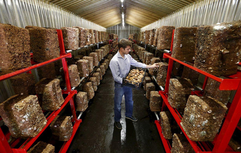 Это бывший Швейцарский армейский бункер возле Эрстфельда, теперь используется для выращивания грибов 29 августа 2015.