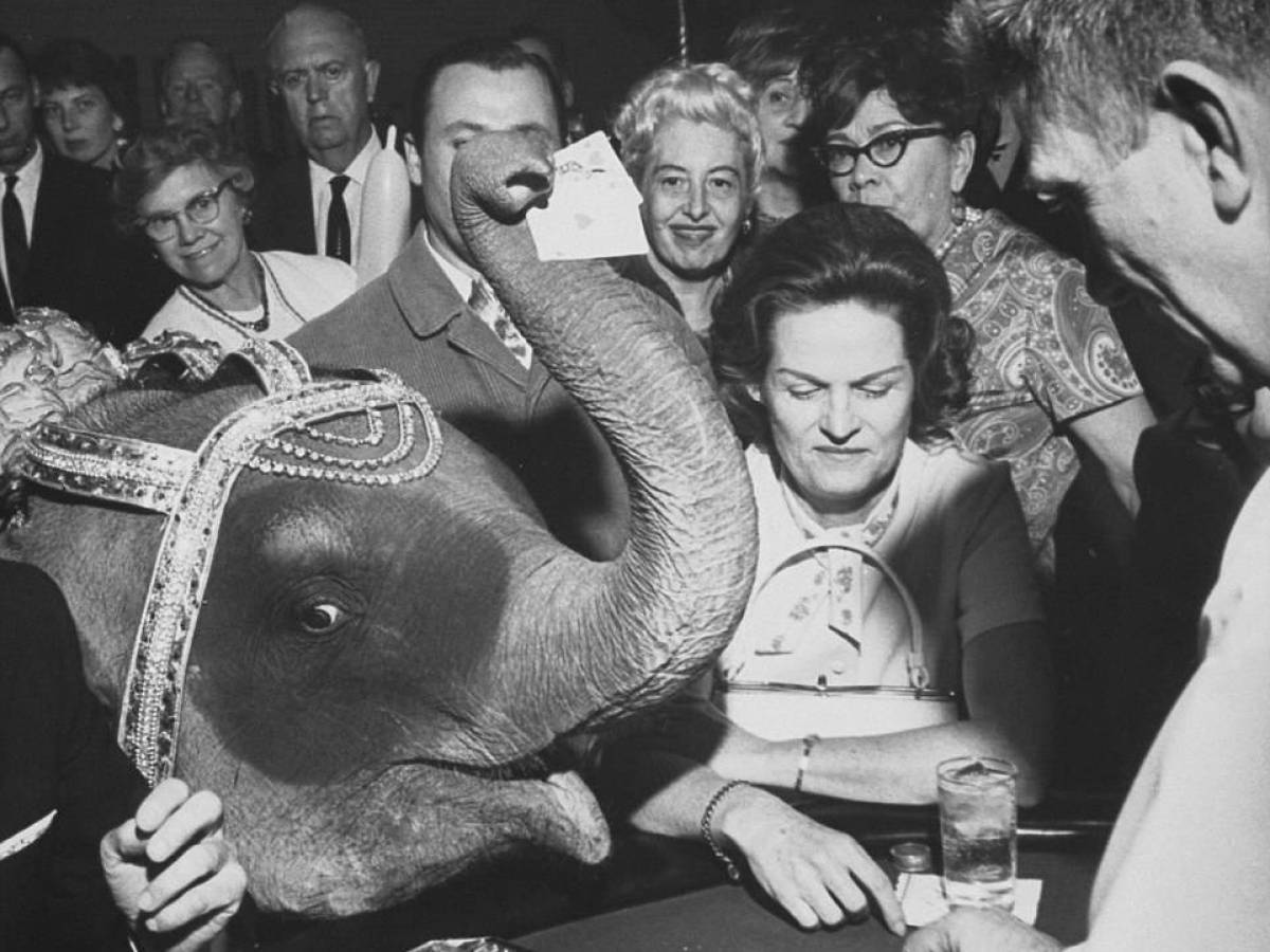 Слон Таня, 1966