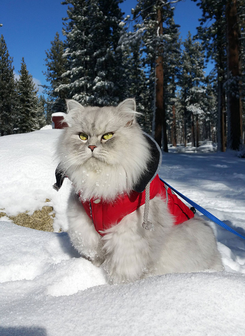 Gandalf_cat_006