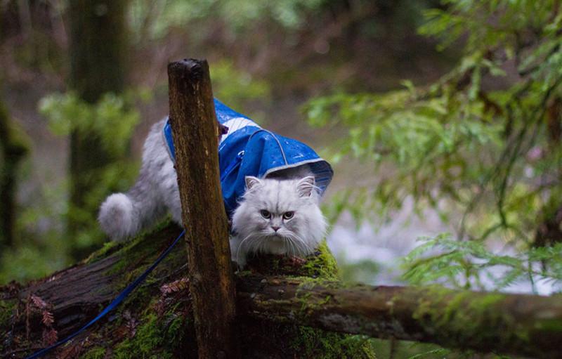 Gandalf_cat_008