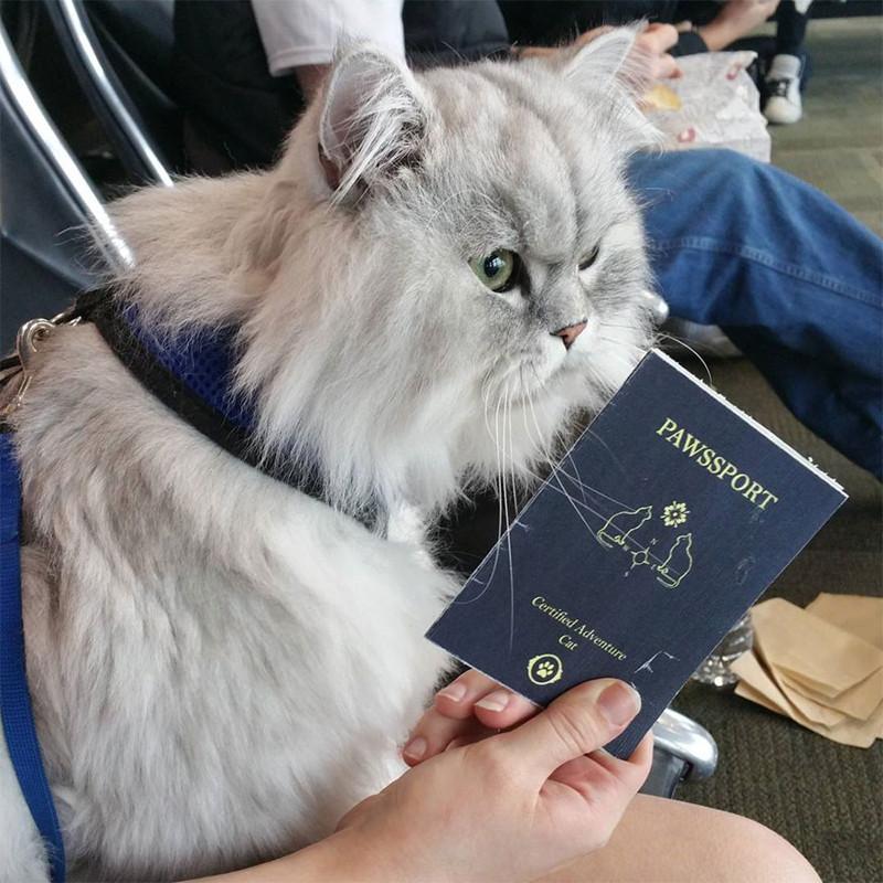 Gandalf_cat_012