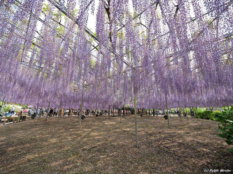 ashikaga_flower_park_001