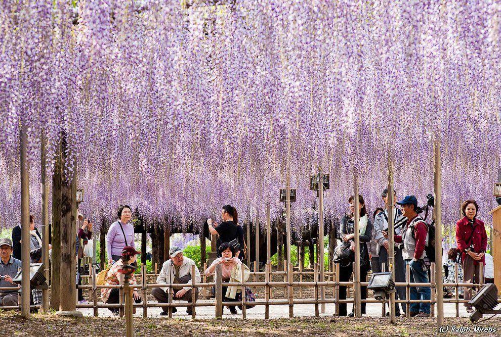 ashikaga_flower_park_003