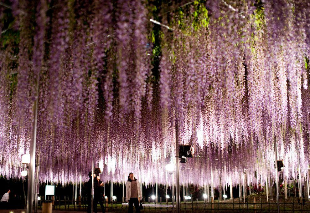 ashikaga_flower_park_004