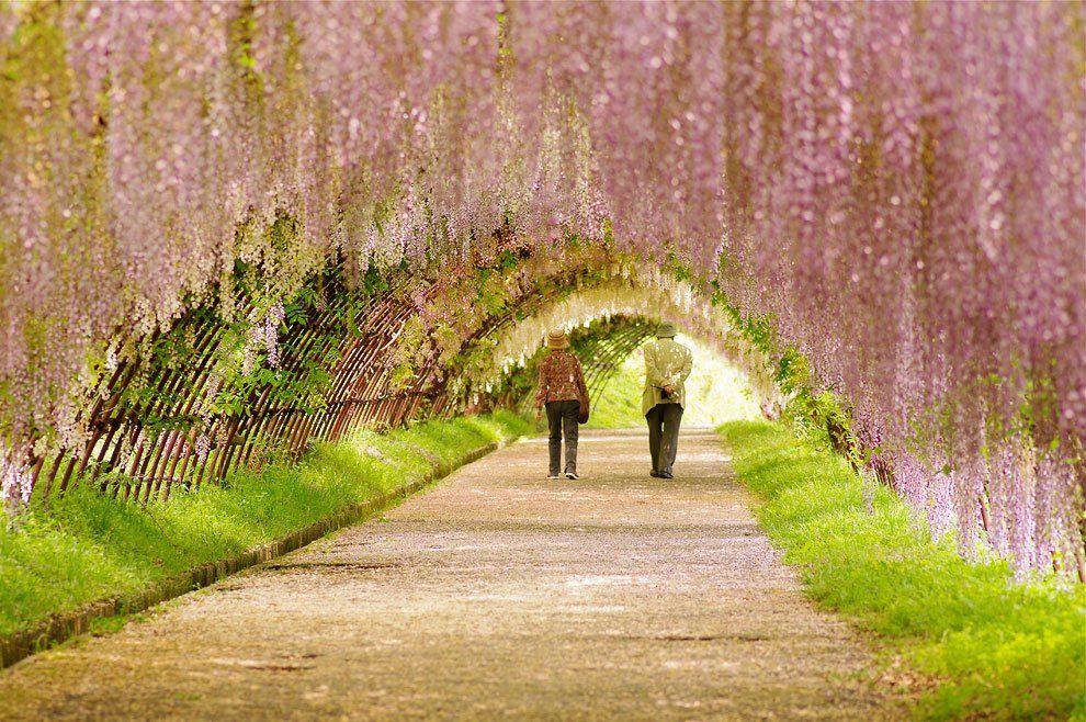 ashikaga_flower_park_006