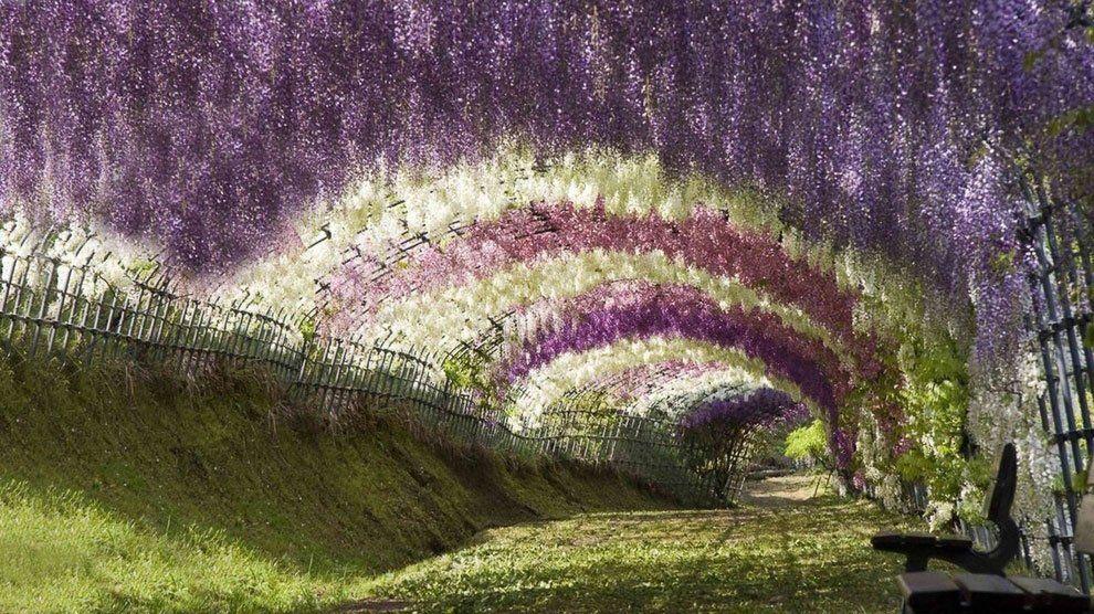 ashikaga_flower_park_009
