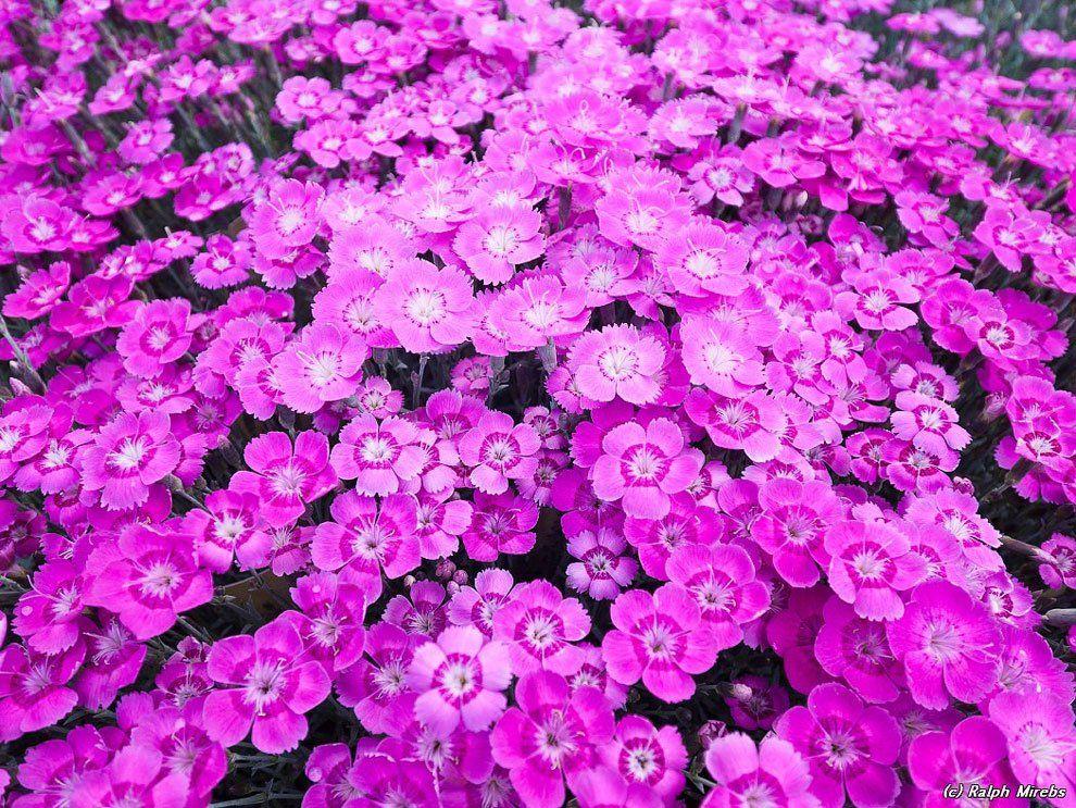 ashikaga_flower_park_013